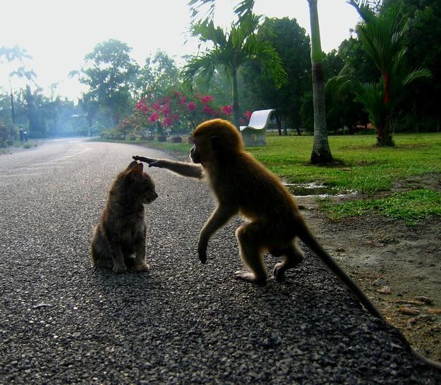 Ein Affe streichelt einer Katze mit seiner Hand über den Kopf. Die Katze scheint diese tierische Streicheleinheit sehr zu genießen.
