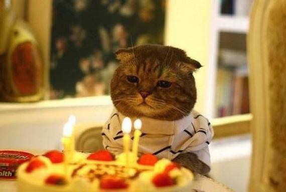 Eine Katze sitzt vor einem Geburtstagskuchen mit vier brennenden Kerzen.
