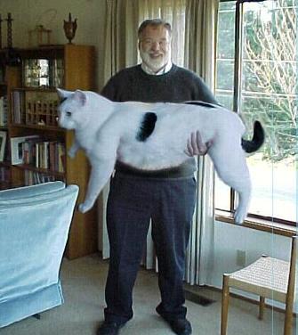 Ein Mann steht in einem Wohnzimmer und hält eine ungewöhnlich große und dicke weiße Katze in seinen Armen. Dabei lacht er, der Katze scheint es zu gefallen.