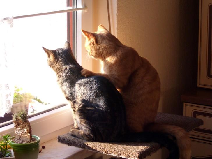 Zwei Katzen sitzen nebeneinander und schauen aus dem Fenster. Die rechte Katze legt der anderen eine Pfote auf den Rücken.