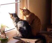 Echte Katzen-Kumpels