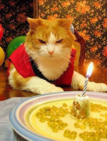 Eine Katze sitzt vor einem Teller, auf dem eine Kerze brennt. Sie scheint ihren Geburtstag zu feiern, allerdings schaut sie trotz dieses feierlichen Anlasses recht mürrisch.