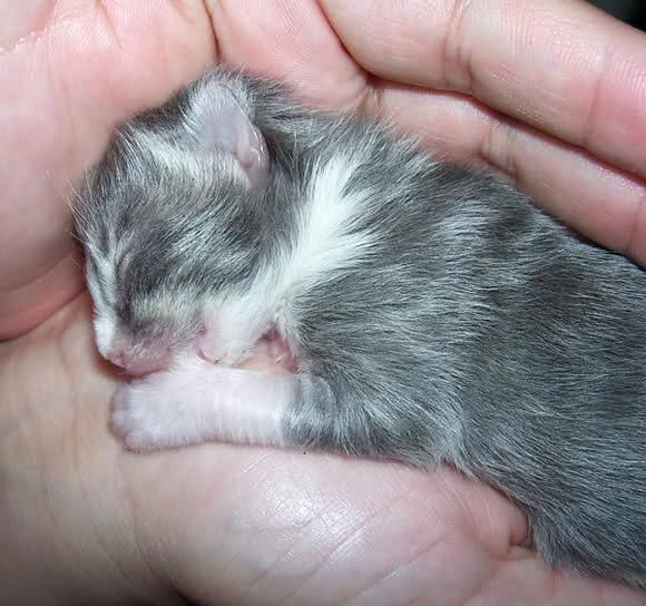 Eine kleine Katze liegt auf einer Handfläche und scheint am Daumen zu nuckeln.