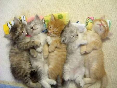 Fünf kleine Katzen liegen aneinander gekuschelt auf einer Matratze. Es sieht sehr gemütlich aus, wie die Katzen sich aneinander kuscheln.