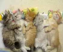 Fünf Katzen kuscheln