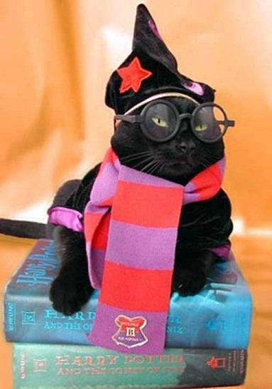 Eine Katze sitzt auf einem Stapel Harry-Potter-Bücher. Sie trägt einen Slytherin-Schal, eine Zaubermütze sowie eine Nickelbrille aus Kunststoff. Die Katze sieht aus wie eine Harry-Potter-Katze.