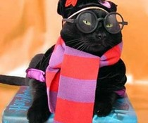 Kitty Potter