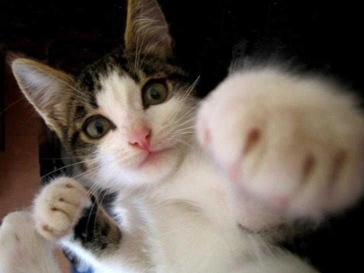 Eine Katze reckt ihre Pfote in Richtung des Objektivs des Fotografen. Sie scheint in die Kamera zu boxen.