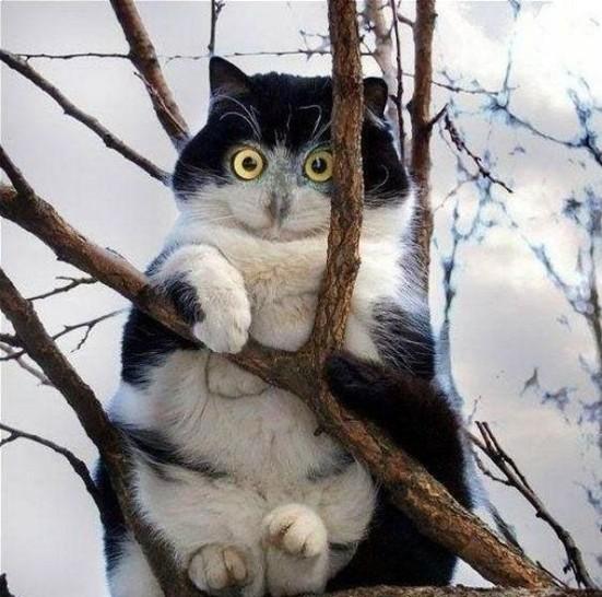 Eine Katze sitzt in einem Baum. Sie sieht aus wie eine Eule.