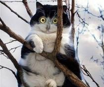 Katzen-Eule