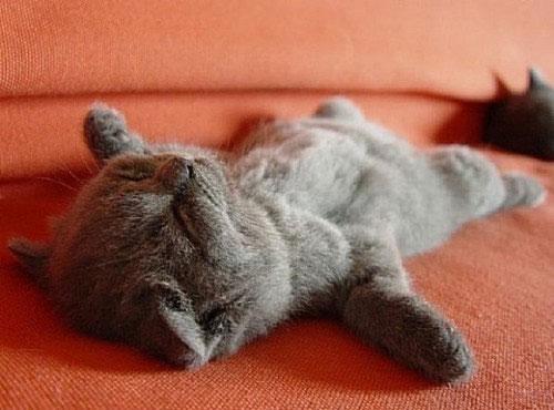 Eine Katze liegt auf einem roten Sofa, sie hat alle Pfoten von sich gestreckt und die Augen geschlossen. Sie scheint sehr gemütlich zu schlafen.