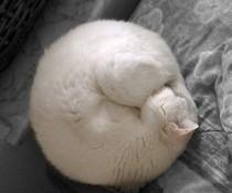Gerollte Katze