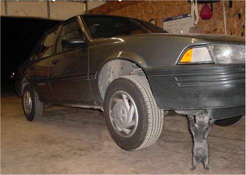 Eine Katze scheint ein Auto in einer Werkstatt hochzuheben. Sie stecht auf den Hinterpfoten und scheint von unten gegen die vordere Stoßstange zu drücken.