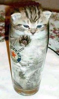 Eine kleine Katze sitzt in einem Bierglas. Nur noch die Augen und die Ohren schauen aus dem Glas heraus.