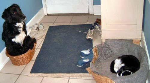 Während eine schwarz-weiße Katze in einem großen Hundekorb schläft, hat es sich ein Hund in einem kleinen Katzenkorb gemütlich gemacht. Die beiden scheinen ihre Plätze getauscht zu haben.