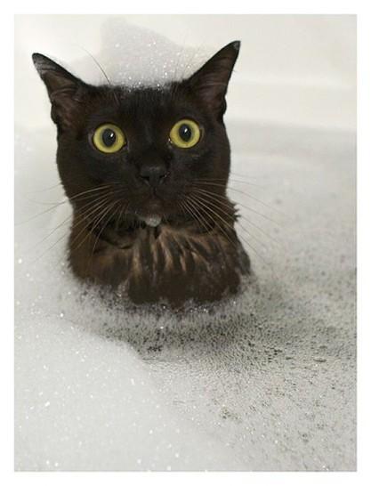 Eine Katze sitzt in einer Badewanne voller Wasser und Schaum. Sie schaut mit dem Kopf aus dem Schaum heraus und hat Schaum auf dem Kopf.