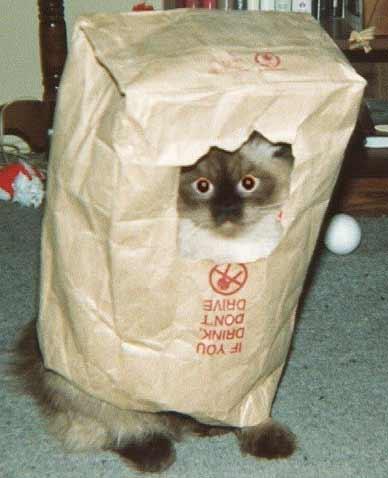 Eine Katze steckt in einer Papiertüte. Duch ein Loch in der Tüte kann die Katze herausschauen.