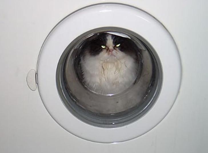 Eine Katze schaut aus dem Bullauge einer Waschmaschine heraus. Sie schaut sehr grimmig, wahrscheinlich macht es ihr keinen Spaß in der Waschmaschine.