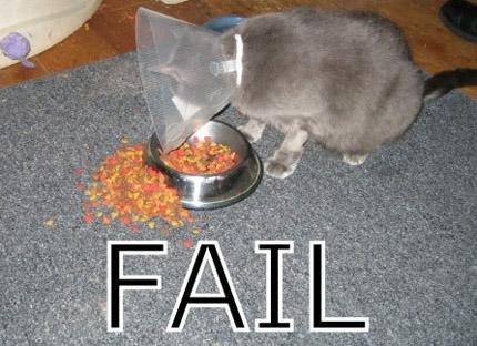 Eine Katze trägt eine Halskrause als Kratzschutz. Sie versucht Katzen-Trockenfutter aus einem Napf zu essen. Leider gelingt ihr dieses Vorhaben nicht, da sie aufgrund ihrer Halskrause nicht in der Lage ist, zu essen.