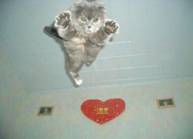 Eine Katze fliegt mit den Pfoten voran durch ein Zimmer.