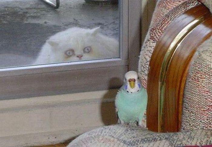 Eine dicke Katze schaut von außen durch ein Fenster in ein Zimmer. Auf einem Sofa sitzt ein Vogel. Die Katze schaut sehr gierig auf die potentielle Beute.