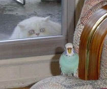 Gieriger Blick