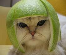 Melonenkrieger