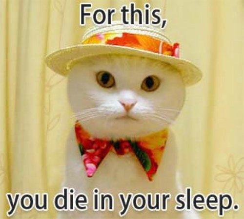 """Eine weiße Katze trägt einen eleganten Hut sowie eine bunte Fliege. Dazu steht der Text: """"For this, you die in your sleep."""""""