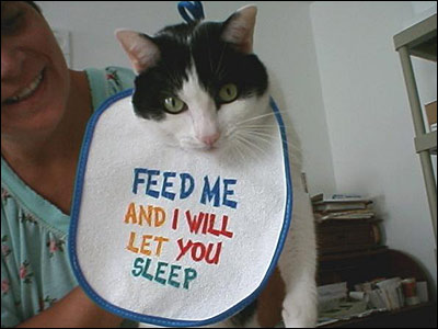 """Eine Katze trägt ein Lätzchen mit der Aufschrift """"Feed me and I will let you sleep"""" (""""Füttere mich und ich lasse dich schlafen"""")."""