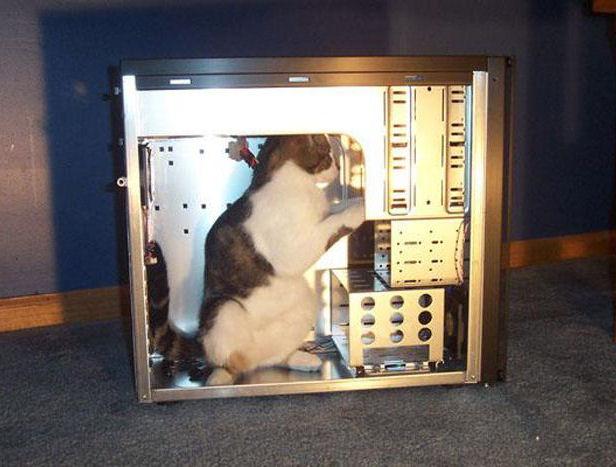 Eine Katze steht in einem PC-Gehäuse und scheint dort etwas zu reparieren.