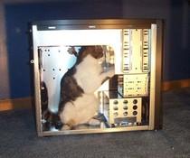 Reparatur-Katze
