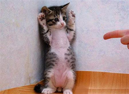"""Eine Katze steht auf den Hinterpfoten in einer Zimmerecke. Eine Person zeigt mit dem Zeigefinger auf die Katze. Diese schaut schuldbewusst und streckt die Pfoten in die Höhe. Sie wirkt, als würde sie sagen """"Es tut mir leid!""""."""