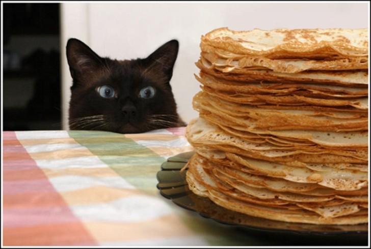 Auf einem Tisch steht ein Teller mit einem großen Stappel Pfannkuchen oder Crepes. Eine schwarze Katze schaut über den Rand des Tisches gierig auf den Stapel voller Köstlichkeiten.