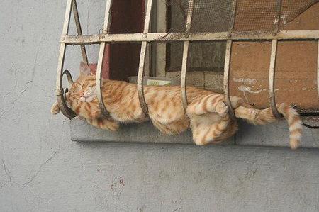 Eine Katze schläft auf einem Fenstergitter. Sie liegt quer in den Gitterstäben.
