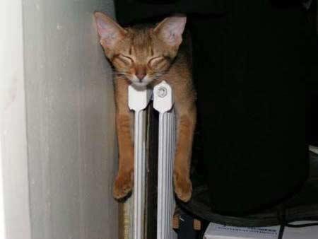 Eine Katze liegt ausgestreckt auf einer Heizung und schläft. Das ist ein gemütlicher und warmer Ort für eine verschmuste Katze.