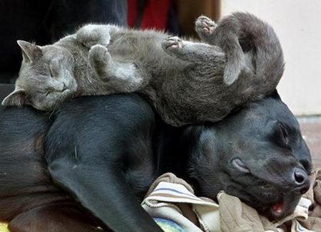 Eine Katze liegt auf einem Hund und schläft auf ihm. Der Hund schläft ebenfalls.