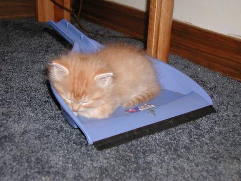 Eine kleine Katze liegt auf einem Kehrblech und schläft. Das Fell der Katze sieht sehr wuschig aus.