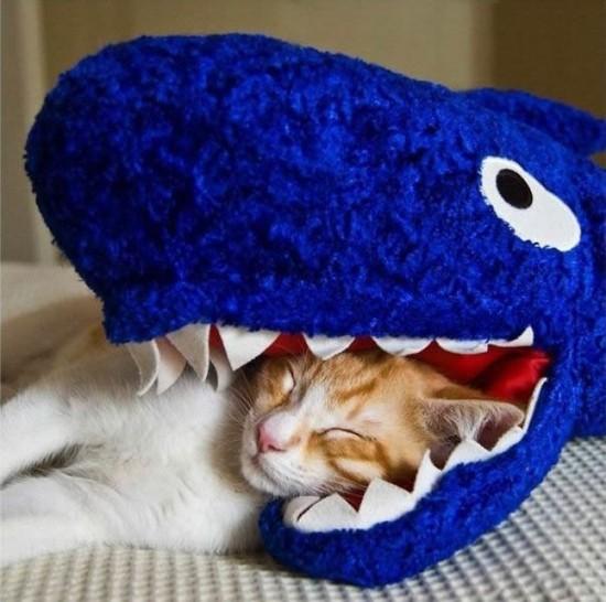 Eine Katze schläft. Ihr Kopf liegt dabei im Maul und zwischen den Zähnen eines Haifischs. Zum Glück ist dieser Haifisch ein Kuscheltier!