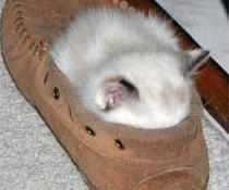 Schlaf im Pantoffel