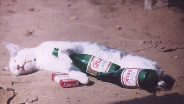 Eine weiße Katze liegt auf der Erde und schläft. Neben ihr liegt eine Packung Zigaretten und zwei Flaschen Bier. Die Katze hat einen Zigarettenstummel im Mund. Es sieht so aus, als hätte die Katze eine heftige Party gefeiert.
