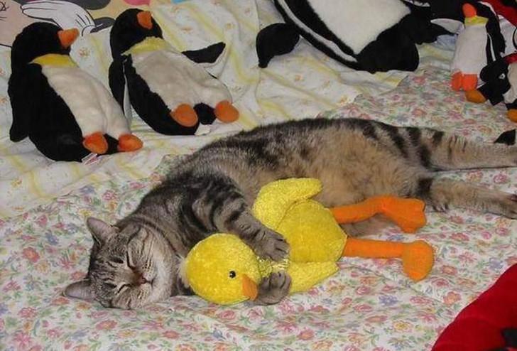 Eine Katze liegt auf einem Bett mit vielen Kuscheltieren. Eine gelbe Kuschel-Ente hat die Katze umarmt und schläft friedlich.