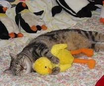 Kuschel-Katze