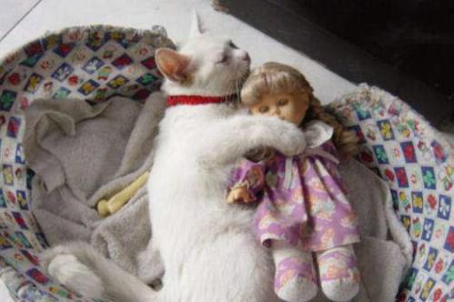 Eine Katze liegt in einem Katzenkorb. In ihren Pfoten hält sie eine Puppe, mit der sie kuschelt.