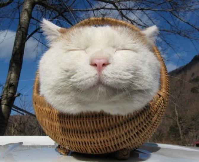 Eine Katze sitzt in einem Korb und grinst in die Kamera.