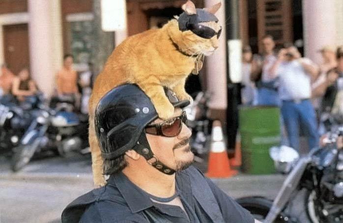 Eine Katze sitzt auf dem Helm eines Motorradfahrers. Die Katze trägt selber wie der Fahrer einen Helm und eine Sonnenbrille.