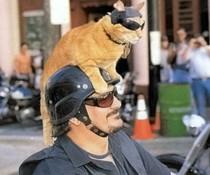 Biker-Cat