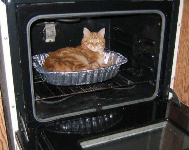 Eine Katze sitzt in einer Auflaufform in einem Backofen.