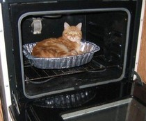 Heisse Katze