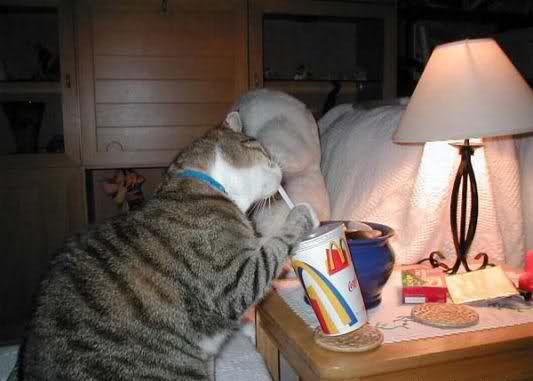 Eine dicke Katze hält in ihren Pfoten einen Trinkbecher einer Fast-Food-Kette. Sie trinkt das Getränk mit einem Strohhalm.