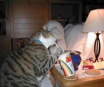 Fastfood-Katze